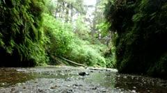 Redwood 131 Fern Canyon Creeks - stock footage