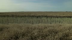 Canola Harvest Stock Footage