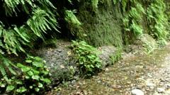 Redwood 132 Fern Canyon Creeks Stock Footage