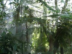 Stock Photo of Rainforest in the fog