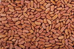 Kidney beans or red beans in a background Stock Photos