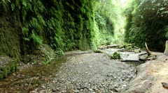 Redwood 133 Fern Canyon Creeks Stock Footage