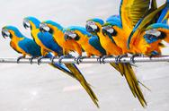 Stock Photo of parrot birds