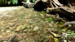 Redwood 136 Fern Canyon Creeks Stock Footage