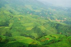 chinese green rice field - stock photo