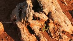Red clay earth and detail of a tree trunk Stock Footage