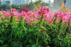 Stock Photo of flowers in garden