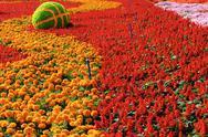 Stock Photo of garden