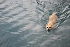 A dog swimming in the river Stock Photos