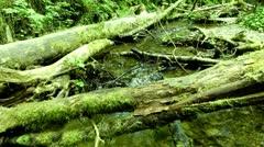 Redwood 139 Fern Canyon Creeks Stock Footage
