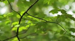 Tilt Up Sumer Trees Stock Footage
