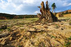 tree root on dried field - stock photo