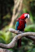 parrot bird - stock photo