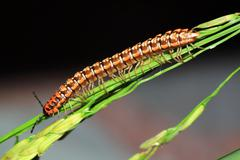 caterpillar on stalk - stock photo