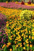 flowers in garden - stock photo