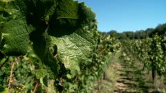 Vineyard in the Mountains Stock Footage