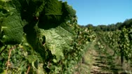 Stock Video Footage of Vineyard in the Mountains