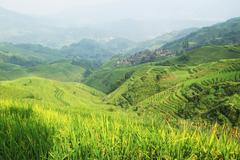 chinese green rice field - stock photo