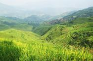 Stock Photo of chinese green rice field