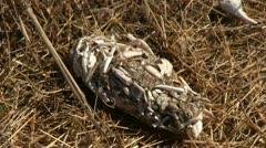 Owl pellet, crawdads Stock Footage