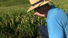 Rice farm, farmer Stock Footage
