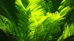 Green and bright palm leaves on blured background Stock Footage