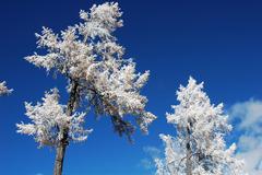 rime in winter - stock photo