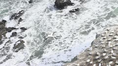 Bird Taking off a cliff Stock Footage