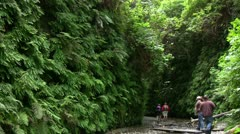 Redwood 86 Fern Canyon Hikers Stock Footage