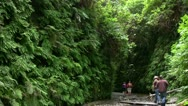 Stock Video Footage of Redwood 86 Fern Canyon Hikers