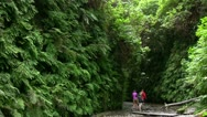 Stock Video Footage of Redwood 87 Fern Canyon Hikers