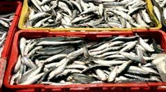 Sardines Stock Footage