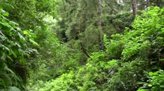 Redwood 89 Fern Canyon Stock Footage