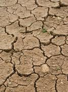 Dried and cracked earth - global warming danger Stock Photos