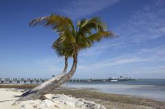 Stock Photo of tropical beach