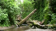 Redwood 93 Fern Canyon Stock Footage