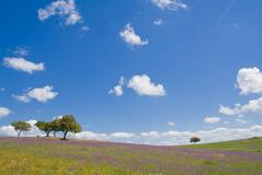 Stock Photo of Spring landscape in Alentejo, Portugal.