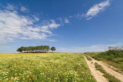 Track in a spring landscape at Alentejo, Portugal. - stock photo