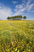 Spring landscape in Alentejo, Portugal. - stock photo