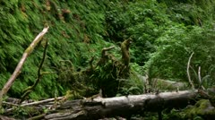Redwood 97 Fern Canyon - stock footage