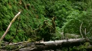 Stock Video Footage of Redwood 97 Fern Canyon