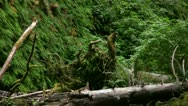 Stock Video Footage of Redwood 98 Fern Canyon