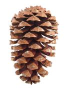 Pine cone isolated over white - stock photo