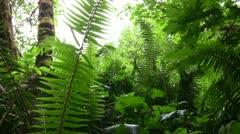 Redwood 105 Dolly Up Big Tree Wayside Ferns Stock Footage