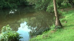 MANGROVE POND IN TROPICAL COUNTRY - stock footage