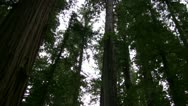 Stock Video Footage of Redwood 119 Stout Grove