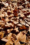 Stock Photo of fallen leaves in autumn