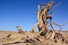 Stock Photo of dead trees