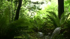 Redwood 122 Stout Grove Ferns Stock Footage