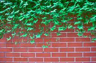Stock Photo of green leaves on brick wall